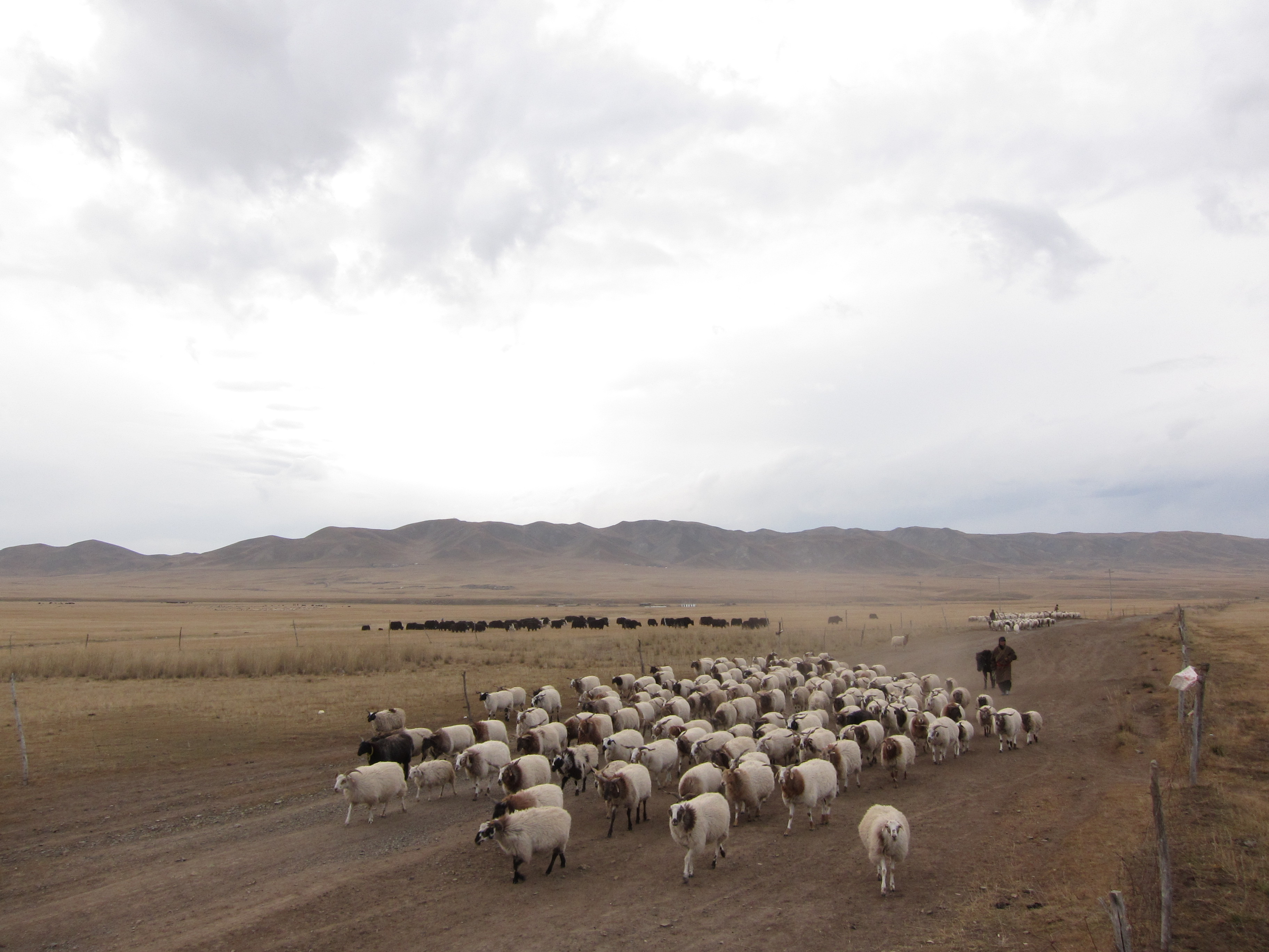 Tibetan Nomads, Farmers and Semi-Nomads on Qinghai-Tibet Plateau